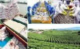 Xuất khẩu nông sản Việt năm 2016 sẽ khởi sắc