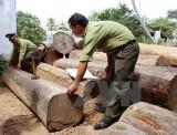 Điều tra vụ hàng chục lâm tặc tấn công cán bộ kiểm lâm ở Đắk Nông