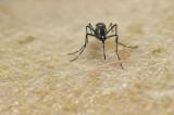WHO lo ngại không điều chế kịp vắcxin chống Zika cho Mỹ Latinh