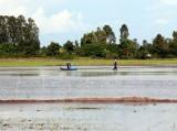 Nước mặn xâm nhập 13/13 tỉnh, thành Đồng bằng sông Cửu Long