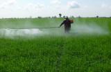 Tân Hưng: Dịch hại trên lúa diễn biến phức tạp