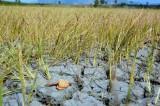 Nghiên cứu sử dụng công nghệ tiết kiệm nước trong mùa khô hạn