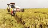 Thu hoạch xong vụ lúa Đông Xuân