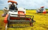 Thống đốc: Không đáp ứng chuẩn quốc tế, nông nghiệp thua trên sân nhà