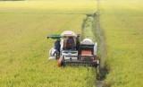Vĩnh Hưng phát triển vùng lúa chất lượng cao gắn xây dựng cánh đồng lớn