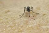 Thêm nhiều bằng chứng cho thấy virus Zika gây ra dị tật đầu nhỏ ở trẻ