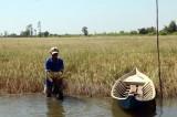 Thông báo khẩn về ngập mặn: cuối tháng 4 mới giảm