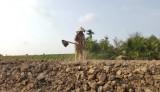 Nước cho vùng hạn, mặn: Thiếu nước, thiếu cả miếng ăn