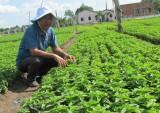 Long An: Sản xuất nông nghiệp thích ứng với biến đổi khí hậu