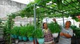 Tuyệt chiêu 1 triệu đồng để có vườn rau sạch tại nhà