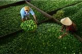 Long An: Hơn 82.000 hộ nông dân sản xuất - kinh doanh giỏi