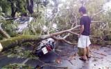 Thừa Thiên Huế: Lốc xoáy chỉ 10 phút cuốn 320 ngôi nhà tốc mái, hàng loạt cây gẫy đổ