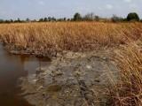Tình trạng xâm nhập mặn ở Nam Bộ vẫn diễn biến phức tạp