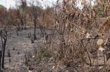 Thạnh Hóa, Long An: Xảy ra 2 vụ cháy rừng đều kịp thời dập tắt