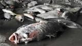Bộ TN-MT yêu cầu các tỉnh báo môi trường biển hàng ngày