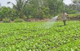 """Sản xuất và tiêu thụ nông sản cần thắt chặt  liên kết """"5 nhà"""""""