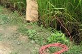Bắt chuột bằng xuyệt điện bị điện giật tử vong