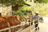 Hưng Thạnh nâng chất xã văn hóa và nông thôn mới