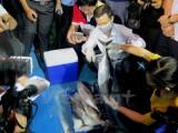 Nước thải Formosa: Kế hoạch xả ra sông Quyền, vận hành lại đổ ra biển?