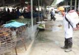 Tân Hưng-Long An: Phun thuốc tiêu độc, khử trùng môi trường chăn nuôi