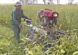 Tân Hưng: Nông dân thu lợi nhuận 8 triệu đồng/ha mè