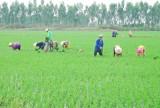 Phát triển nông nghiệp hiệu quả từ quy hoạch vùng
