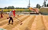 Gạo Việt: Hãy loại bỏ rào cản chính sách, đừng sợ Thái Lan xả kho