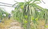 Để nông nghiệp phát triển bền vững