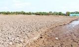 Bến Lức hỗ trợ trên 1,5 tỉ đồng cho nông dân trồng lúa bị thiệt hại do hạn, mặn