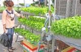 Lo sợ thực phẩm bẩn, người nội trợ trồng rau sạch tại nhà