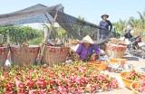 Châu Thành: Không phát hiện thêm trường hợp dùng visa du lịch sang Việt Nam làm thương lái