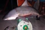 Đang kiểm tra tin đồn bắt được cá mập trên sông Vàm Cỏ Tây