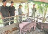 Cựu thanh niên xung phong huyện Thủ Thừa giúp nhau làm kinh tế, ổn định cuộc sống