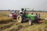 Tân Hưng thu hoạch gần 50% diện tích lúa hè thu