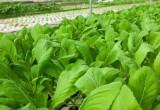 Cần Giuộc: Tăng cường kiểm tra an toàn thực phẩm trên sản phẩm nông sản