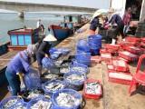 Kim ngạch xuất khẩu nông lâm thủy sản đạt hơn 15 tỷ USD trong 6 tháng