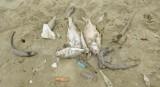 Thừa Thiên-Huế thiệt hại khoảng 135 tỷ đồng vì cá chết bất thường