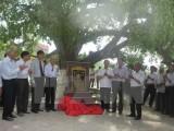 Công nhận cây lộc vừng 600 năm tuổi ở Vĩnh Phúc là cây di sản