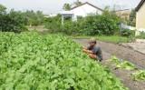 Long An: Hợp tác xã hướng tới mục tiêu phát triển bền vững