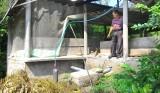 Hiệu quả hầm biogas góp phần bảo vệ môi trường trong chăn nuôi