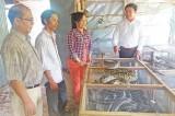 Tân Hiệp: Phát triển kinh tế hộ từ nuôi trăn, bò