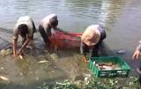 Bắt cá ở Campuchia, 1 người bị bắn chết, 1 người nguy kịch
