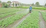 Bến Lức – Long An: 12.000 hộ nông dân đăng ký danh hiệu sản xuất kinh doanh giỏi