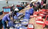 Không bỏ sót đối tượng bị ảnh hưởng vì sự cố môi trường biển