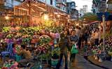 Việt Nam là điểm đến lý tưởng cho du khách nữ thích du lịch một mình