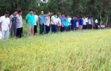 Tân Thạnh : Xây dựng được 10 cánh đồng lớn