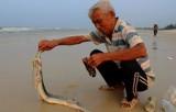 Cuối tháng 8 Bộ Y tế sẽ công bố chất lượng cá biển ở 4 tỉnh miền Trung