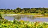 Khai thác hiệu quả du lịch từ Khu Bảo tồn đất ngập nước Láng Sen