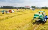 Doanh nghiệp-nông dân:Mấu chốt để phát triển nông nghiệp hàng hóa