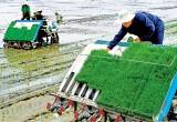 Ứng dụng công nghệ cao bước đột phá trong tái cơ cấu nông nghiệp